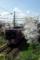 京都新聞写真コンテスト「まったり走ろう・北野まで」