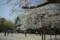 京都新聞写真コンテスト「午前中の公園」