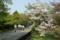 京都新聞写真コンテスト「春の修学旅行生」