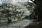 京都新聞写真コンテスト「家族の桜ポタ」