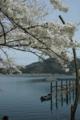 京都新聞写真コンテスト「そよ風に揺られて」