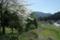 京都新聞写真コンテスト「大野の春」