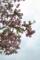 京都新聞写真コンテスト「花水木」
