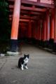 京都新聞写真コンテスト「稲荷山の白足袋クン」