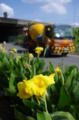 京都新聞写真コンテスト「黄色い残暑」