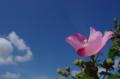 京都新聞写真コンテスト「行く夏」