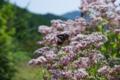 京都新聞写真コンテスト「旅程・柚子の里」