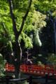 京都新聞写真コンテスト「お熱いふたり」