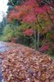 京都新聞写真コンテスト「雨上がりの林道」