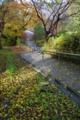 京都新聞写真コンテスト「朝の坂道」