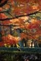 京都新聞写真コンテスト「時を忘れて・・」