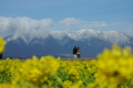 京都新聞写真コンテスト「早春の旅路」