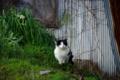 京都新聞写真コンテスト「春待ちネコ」