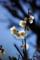 京都新聞写真コンテスト「春の光」