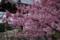 京都新聞写真コンテスト「鐘楼に春気配」