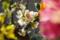 京都新聞写真コンテスト「花の微笑み」