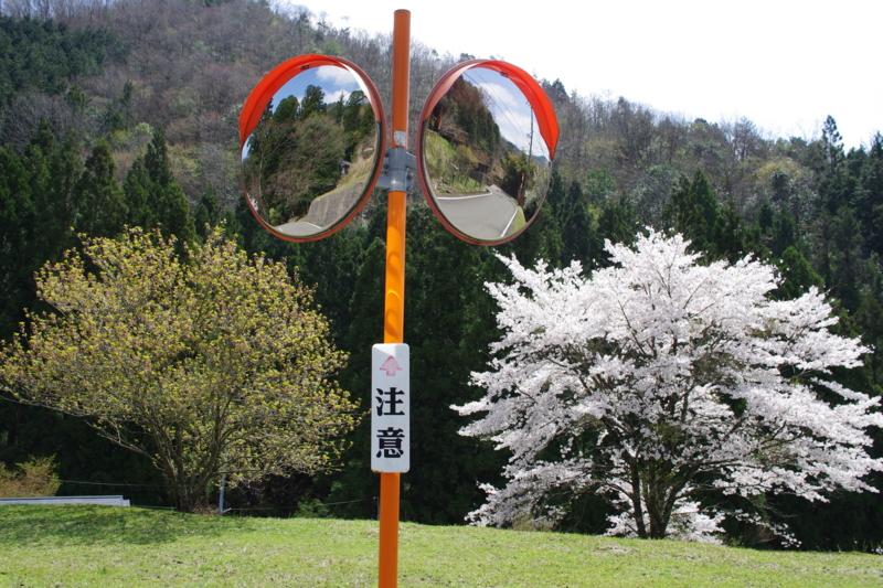 京都新聞写真コンテスト 「季節の分岐点」