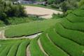 京都新聞写真コンテスト 「茶畑の昼休み」