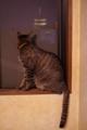 京都新聞写真コンテスト 「夜景を楽しむネコ」