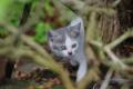 京都新聞写真コンテスト 「赤ちゃんネコの冒険」