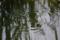京都新聞写真コンテスト 「母子の波紋」