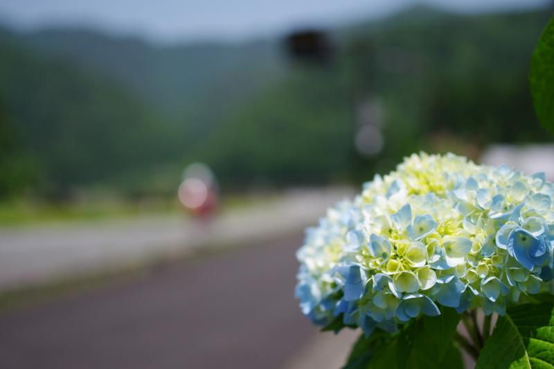 京都新聞写真コンテスト 「真昼の幻影」