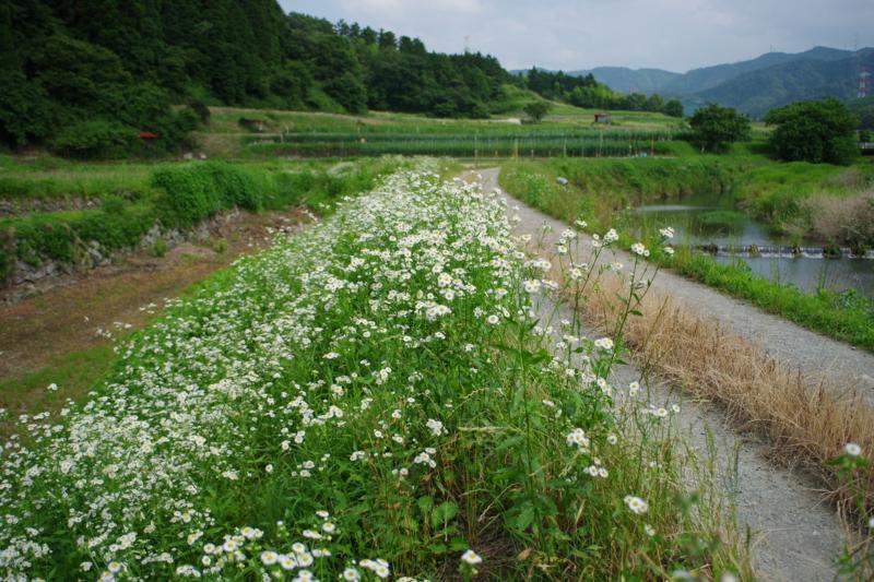 京都新聞写真コンテスト 「初夏の道」