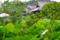 京都新聞写真コンテスト 「雨の露」