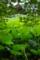 京都新聞写真コンテスト 「牛蛙鳴く寺」