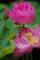 京都新聞写真コンテスト 「咲く花、散る花」