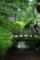 京都新聞写真コンテスト 「小さな橋」