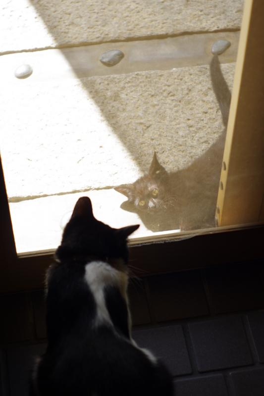 京都新聞写真コンテスト 「身の上相談を聞くネコ」