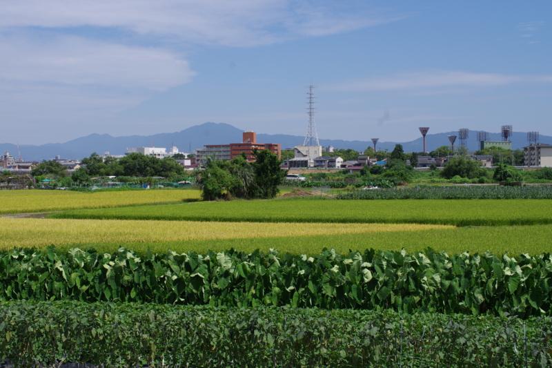 京都新聞写真コンテスト「9月の風」
