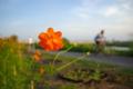 京都新聞写真コンテスト「サイクリングロード」