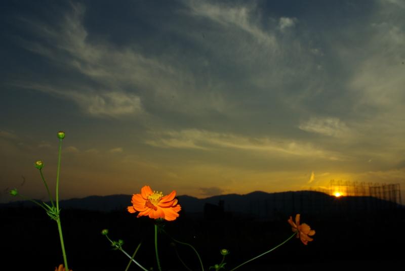 京都新聞写真コンテスト「狭間の季節の落日」