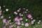 京都新聞写真コンテスト 「花になった蝶」