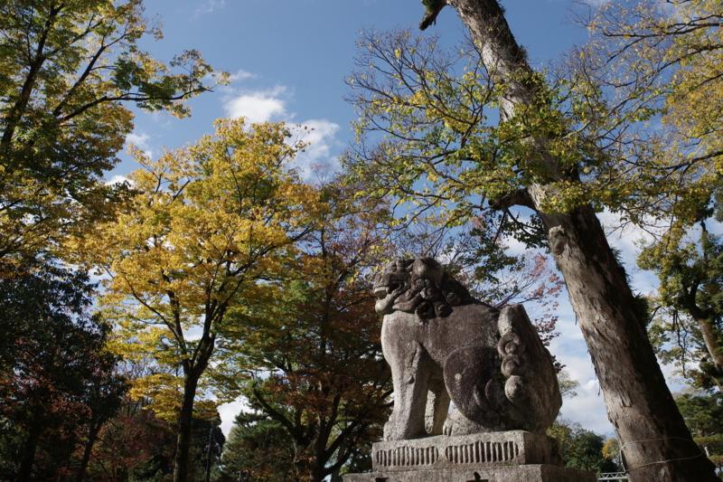 京都新聞写真コンテスト「獅子が見る季節」