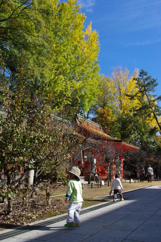 京都新聞写真コンテスト「光と影の秋さがし」