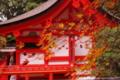 京都新聞写真コンテスト「朱の枯淡」
