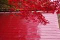 京都新聞写真コンテスト「紅い屋根」