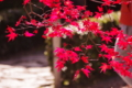 京都新聞写真コンテスト「真紅の昼時間」