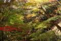 京都新聞写真コンテスト「木漏れ日」
