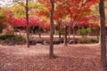京都新聞写真コンテスト「秋の遊歩道」