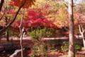 京都新聞写真コンテスト「出勤時間」