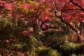 京都新聞写真コンテスト「ボクらの秘密基地」