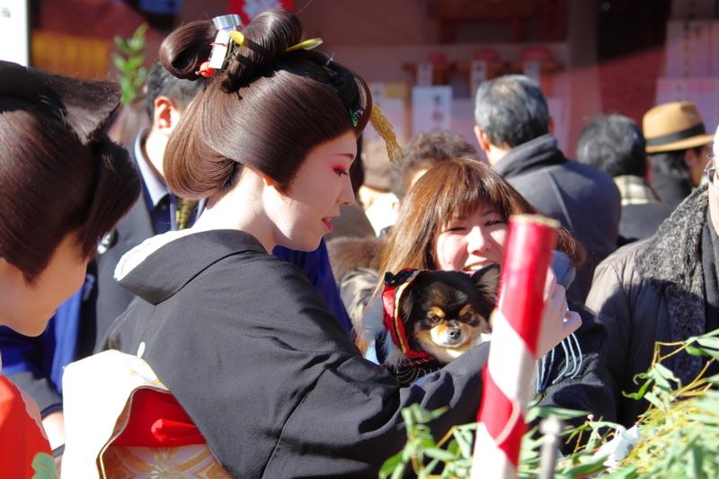 京都新聞写真コンテスト「ワンちゃんと記念撮影」