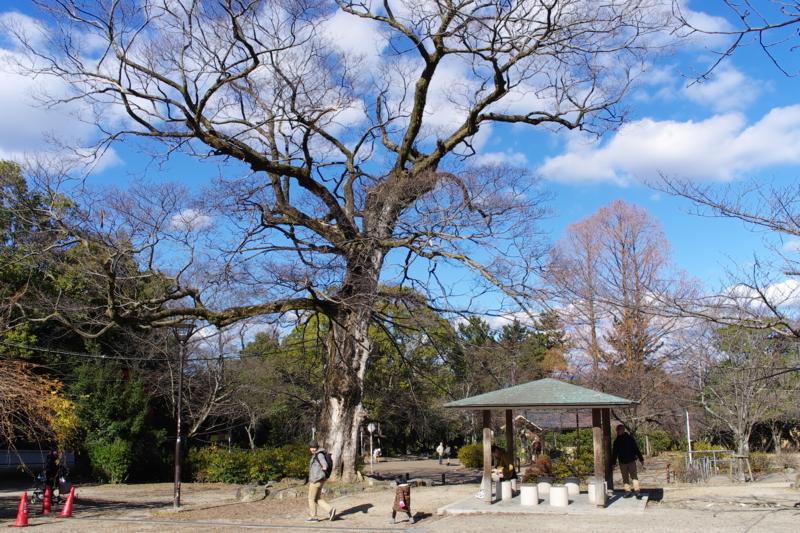 京都新聞写真コンテスト 「冬の公園」