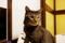 京都新聞写真コンテスト「障子にネコ」