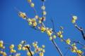 京都新聞写真コンテスト「初春の香り」