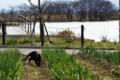 京都新聞写真コンテスト「黒いジャガー」